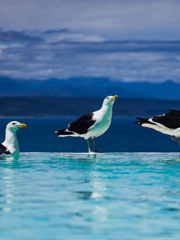 Seagulls sitting by pool