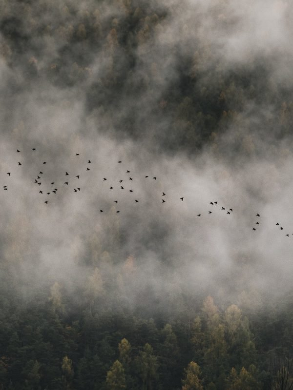 Birds flying through mist