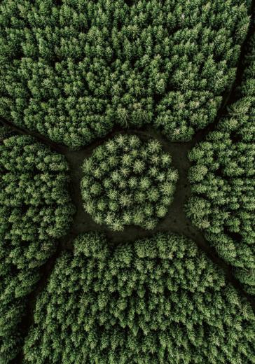 Trees in a circle