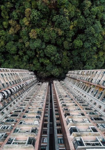 Forest and building in Hong Kong