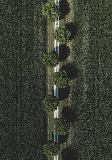 Abstract Aerial Art_Pom Poms
