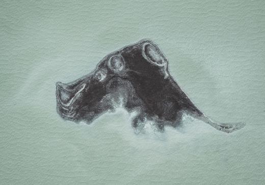 Abstract Aerial Art_Rhino Mutt